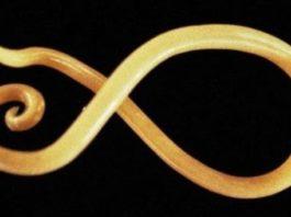 Круглые черви общая характеристика