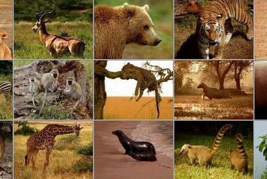 Млекопитающие животные