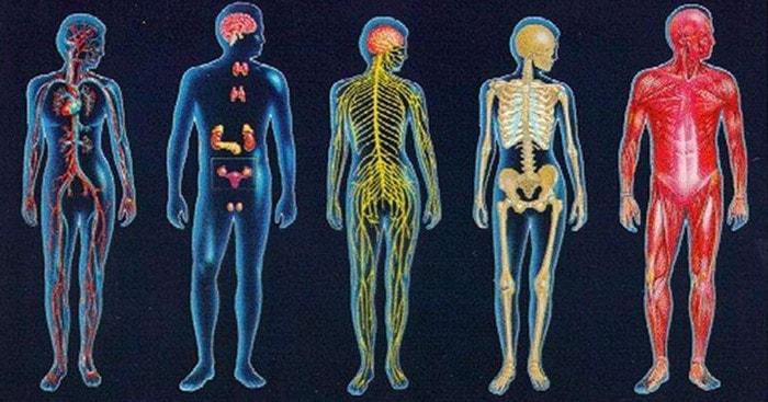 общий обзор организма человека общее знакомство с