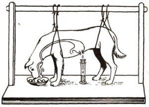 Работы И. П. Павлова по изучению деятельности слюнных желез и пищеварения в желудке