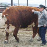 Породы крупного рогатого скота