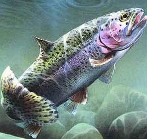 Поведение рыб.