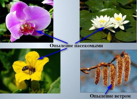 Приспособление растений к опылению насекомыми и ветром
