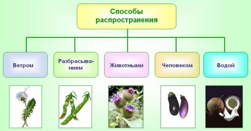 Пути распространения семян
