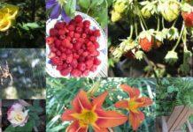 Видовое разнообразие растений
