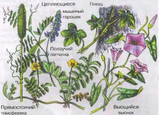 Разнообразие стеблей