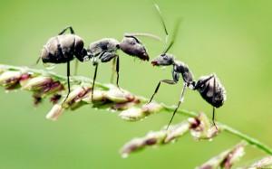 Роль насекомых в природе и их практическое значение