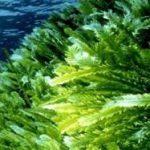 Роль водорослей в природе