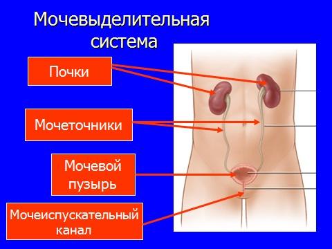 Система выделения человека