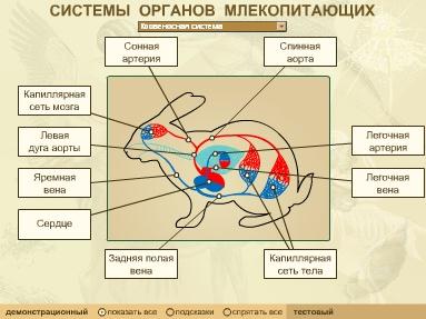 Системы органов млекопитающих