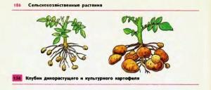 Создание культурных растений человеком