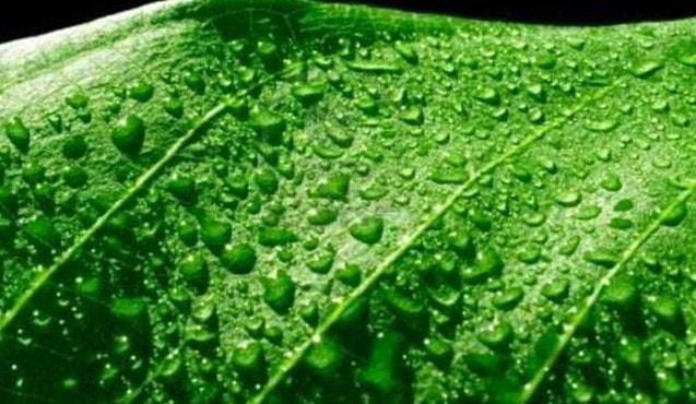 Транспирация - механизм испарения воды листьями растения