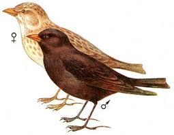 Виды птиц (птицы парков, птицы степей, птицы леса)