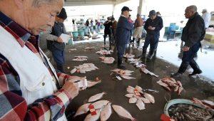 Влияние деятельности человека на численность рыб