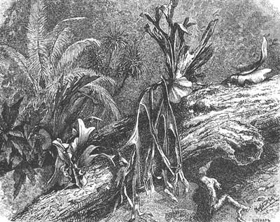 Влияние хозяйственной деятельности человека на видовое многообразие цветковых растений.