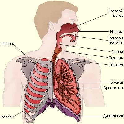 Значение дыхания