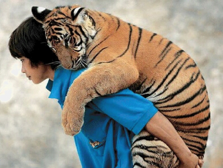 Значение животных в природе и жизни человека