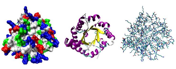 Ферменты и их роль в пищеварении