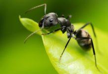 Роль насекомых в природе и жизни человека