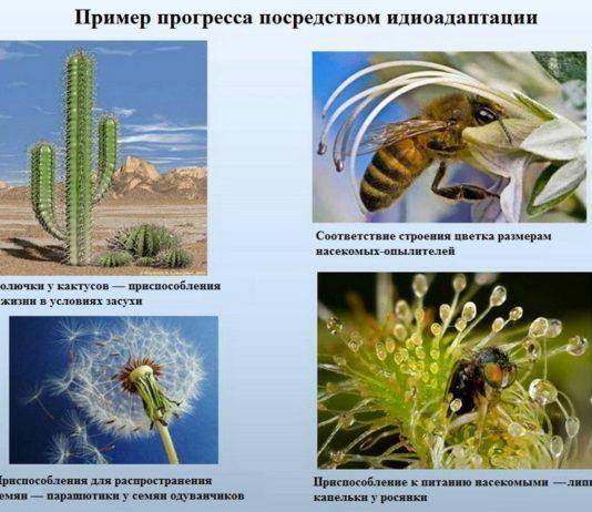 Биологический прогресс