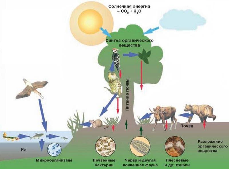 Живые организмы в круговороте веществ