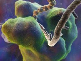 Так выглядит рибосома