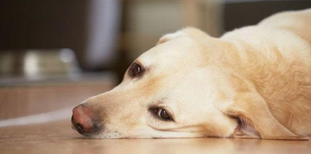 Бесплодие - один из симптомов бруцеллеза