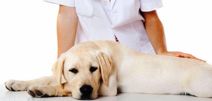 Ентероколит у собак
