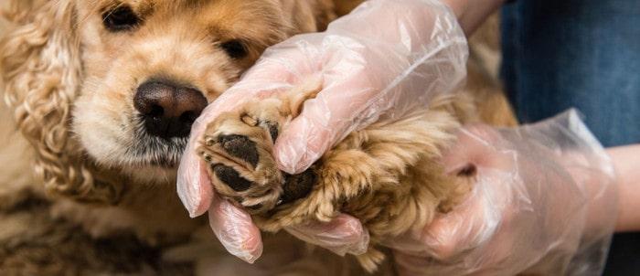 Проверить наличие клещей у собак